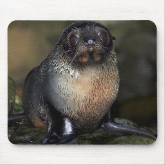Baby New Zealand Fur Seal Mouse Mat