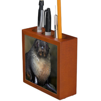 Baby New Zealand Fur Seal Pencil Holder