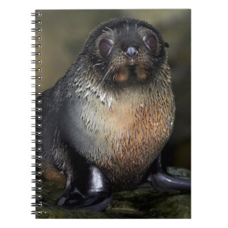 Baby New Zealand Fur Seal Spiral Note Books