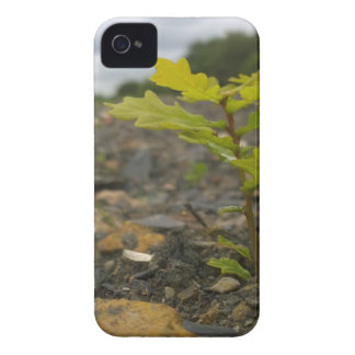 Baby Oak iPhone 4 Case
