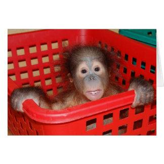 Baby Orangutan Orphan Greeting Cards