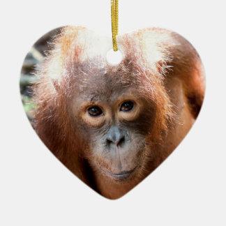 Baby Orangutan Orphan Kobe Christmas Ornament