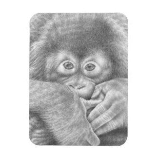 Baby Orangutan Premium Magnet