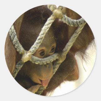 Baby Orangutan Sticker