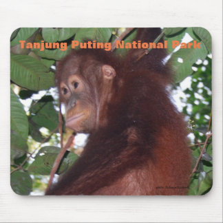 Baby orangutan:Tanjung Puting National Park Mouse Mat