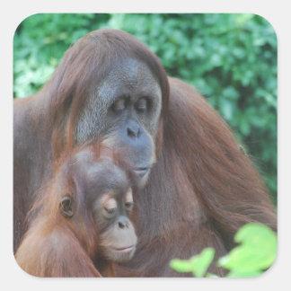 Baby Orangutan with Mother  Stickers