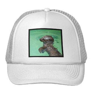 Baby Otter Baseball Hat