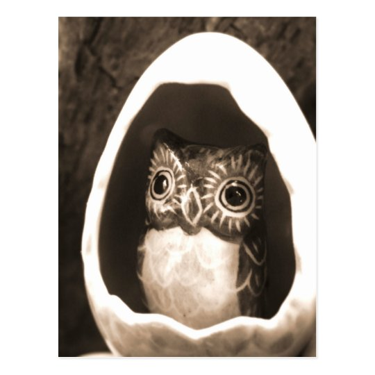 Baby Owl Postcard