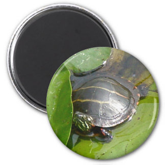 Baby Painted Turtle on Lilypad Items 6 Cm Round Magnet