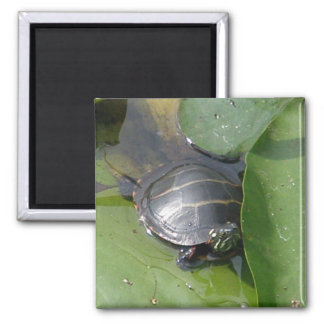 Baby Painted Turtle on Lilypad Items Square Magnet