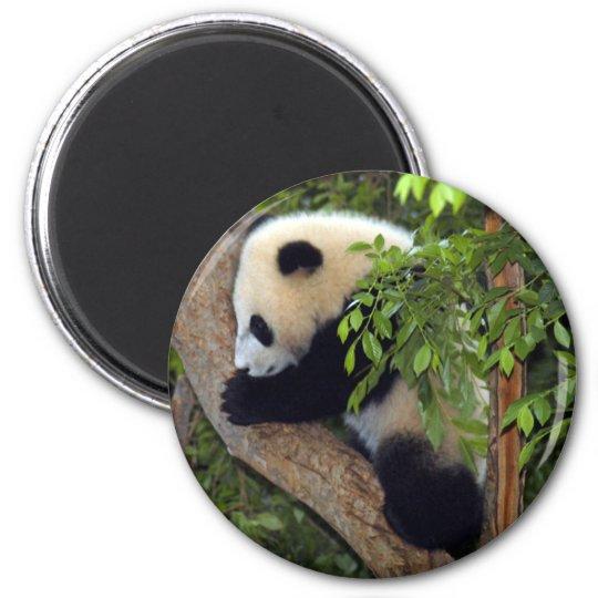 baby-panda3-10x10 magnet