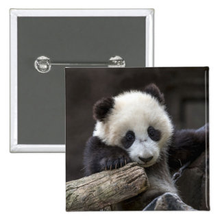 Baby panda climb a tree 15 cm square badge