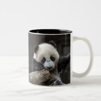 Baby panda climb a tree Two-Tone coffee mug