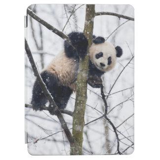 Baby Panda in Tree iPad Air Cover