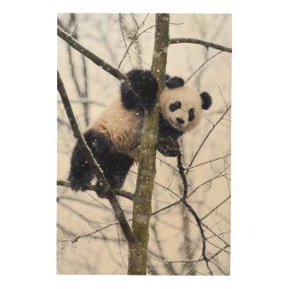 Baby Panda in Tree Wood Print