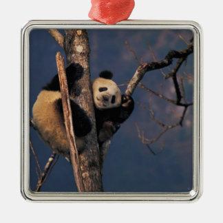 Baby panda playing on tree, Wolong, Sichuan Christmas Ornament