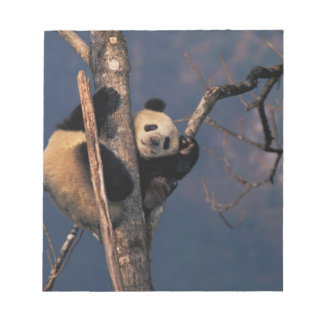 Baby panda playing on tree, Wolong, Sichuan Notepad