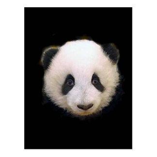 Baby Panda Post Cards