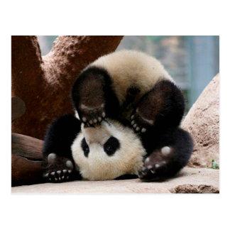 Baby pandas playing - baby panda  cute panda postcard