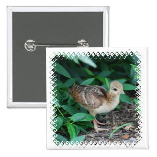Baby Peacock Chick Pin