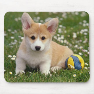 Baby Pembroke Welsh Corgi Puppy Dog Mouse Mat