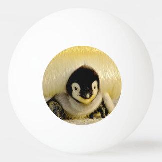 baby penguin ping pong ball