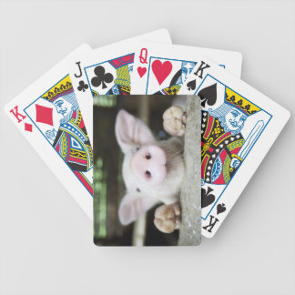 Baby Pig in Pen, Piglet Bicycle Playing Cards