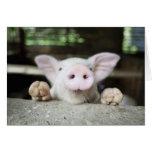 Baby Pig in Pen, Piglet Greeting Card