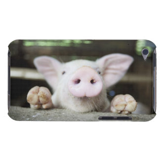 Baby Pig in Pen, Piglet iPod Touch Case
