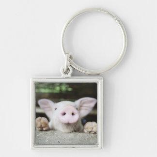 Baby Pig in Pen, Piglet Key Ring
