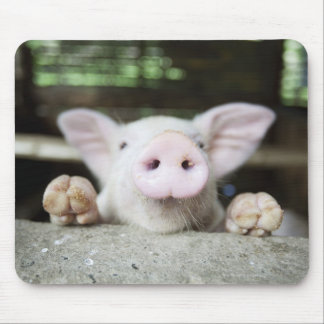 Baby Pig in Pen, Piglet Mouse Pad
