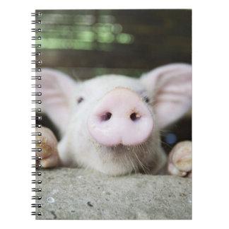 Baby Pig in Pen, Piglet Notebooks