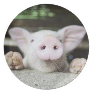 Baby Pig in Pen, Piglet Plate