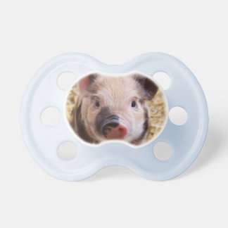 Baby pig pacifier