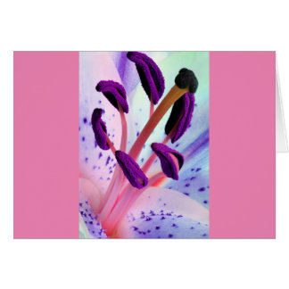 Baby Pink and Purple Tiger Lily Flower Greeting Card
