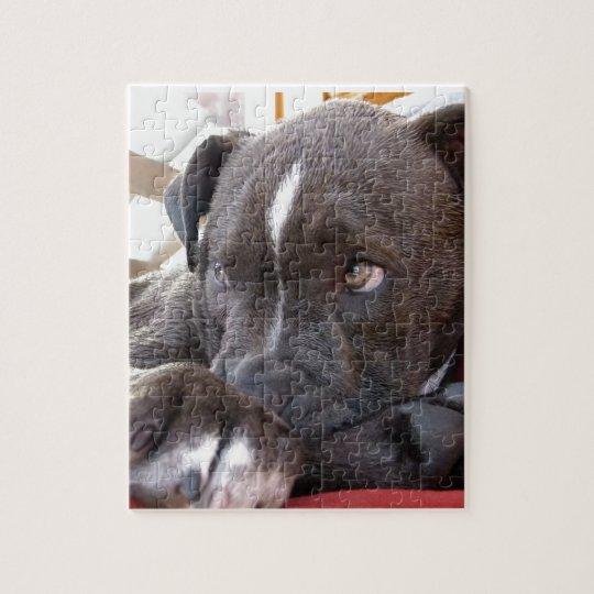 Baby Pitbull Puppies Jigsaw Puzzle