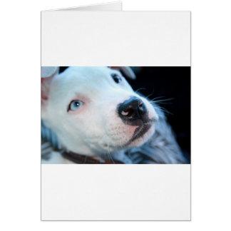 Baby Pitbull Puppy Card