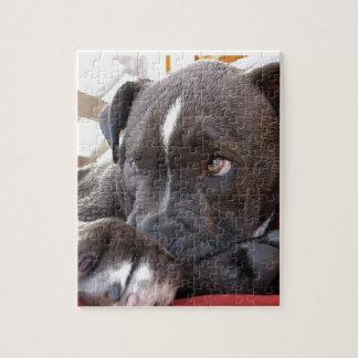 Baby Pitbull Puppy Jigsaw Puzzle