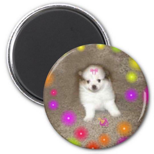 Baby Pomeranian Magnet