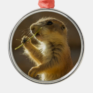 Baby prairie dog eating, Arizona Silver-Colored Round Decoration