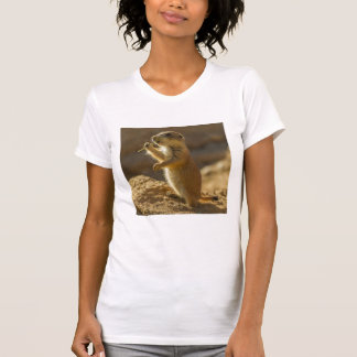 Baby prairie dog eating, Arizona T-Shirt