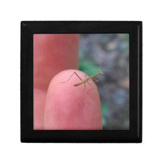 Baby Praying Mantis on Finger Trinket Box