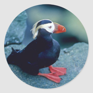 Baby Puffin Classic Round Sticker