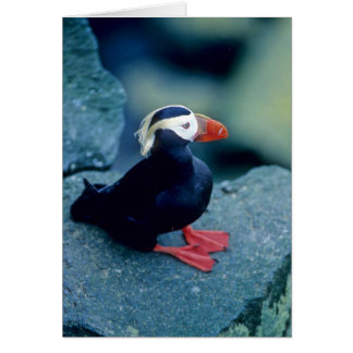 Baby Puffin Greeting Card