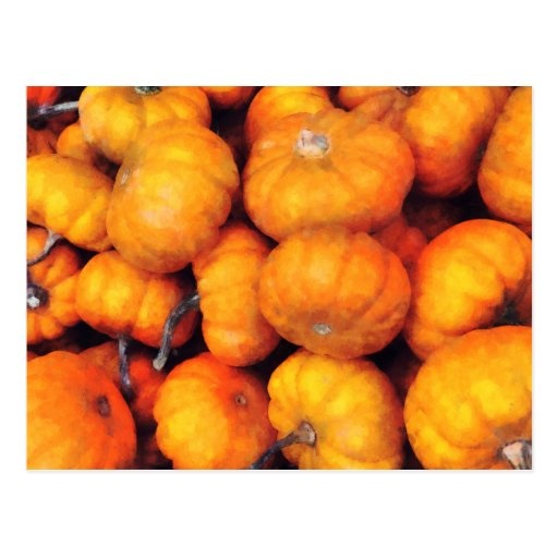 Baby Pumpkins Post Card