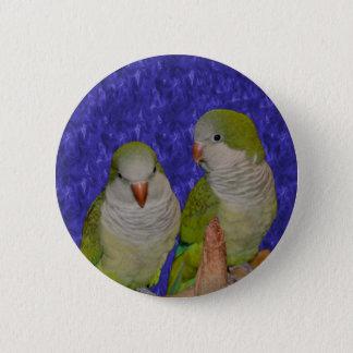 Baby Quaker Parrot Pair Animal Button
