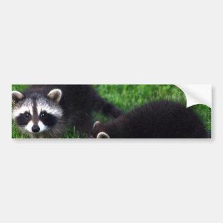 Baby Raccoons Bumper Stickers