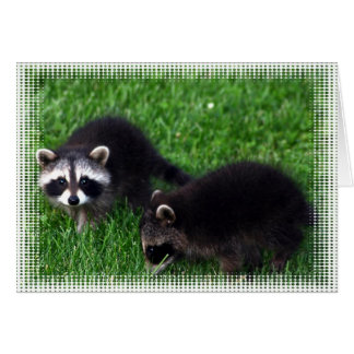 Baby Raccoons Greeting Card