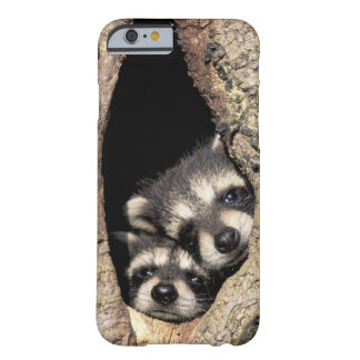 Baby raccoons in tree cavity Procyon Barely There iPhone 6 Case