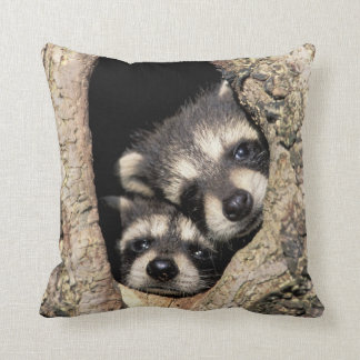 Baby raccoons in tree cavity Procyon Cushion
